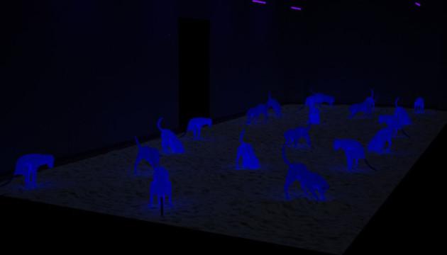 cielo-Perrera-4