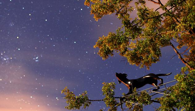 Encontraron cielo, MAM de Chiloe