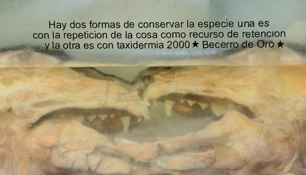 El beso eterno, estructuras óseas en formalina, Proyecto Taxidermia 2000