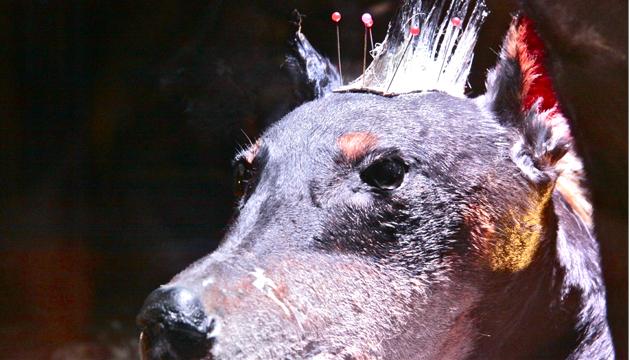 Perro Punk, Óleos sobre perro, taxidermia 2002