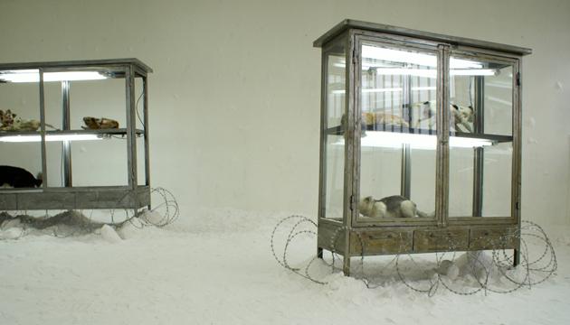 Pintacanes, taxidermia en vitrinas sobre carpeta de sal, 2007