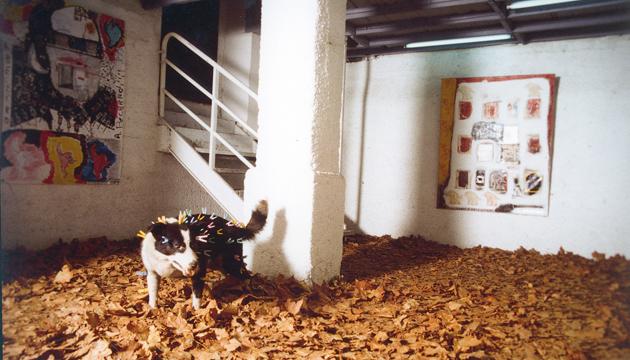 Semidoméstico, taxidermia y pintura, Galería 108, 1997