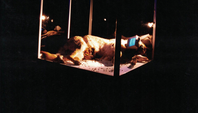 Vitrina tercermundista, Antonio Becerro, 1999, MAC