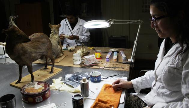 La taxidermia es un oficio que cruza la ciencia, el arte y el detalle artesanal