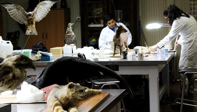 """""""La taxidermia es un arte"""", dice Ricardo Vergara"""