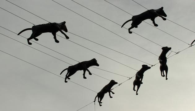 Esculturas caninas, Antonio Becerro, toma 1