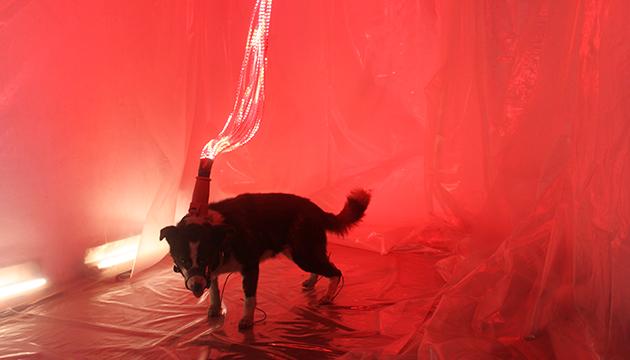 El espíritu canino transita tecnológicamente al cielo