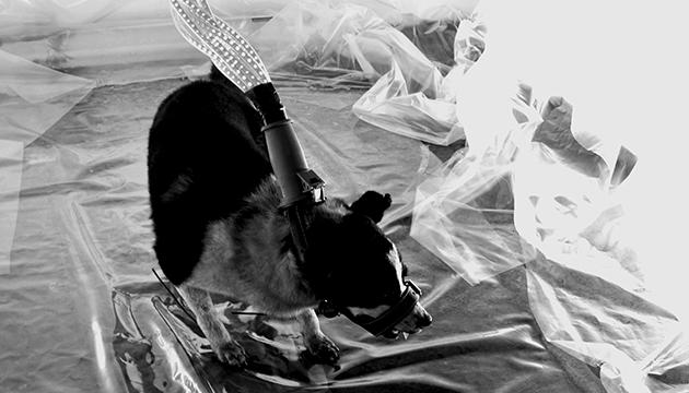 Anónimo, Antonio Becerro/Trimex, 2017, toma 5