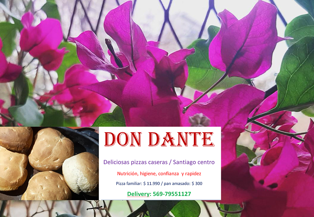 Don Dante / 569-79551127